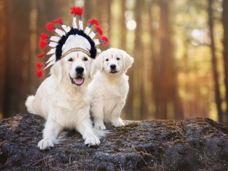Native American Dog Names (Complete List of 300+ Meaningful Names) Cover