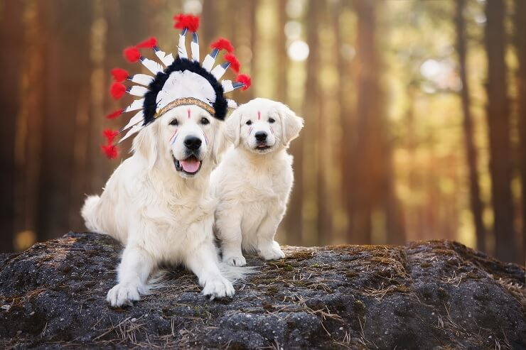 Native American Dog