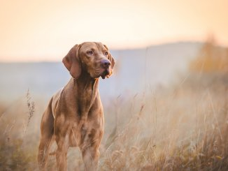 Hunting Dog Names 200+ Powerful Names For Your Hunting Hound Cover