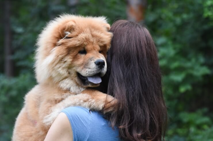 Hugging A Chow Chow