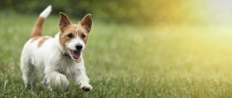 How To Choose The Right Dog Food For Your Furry Friend