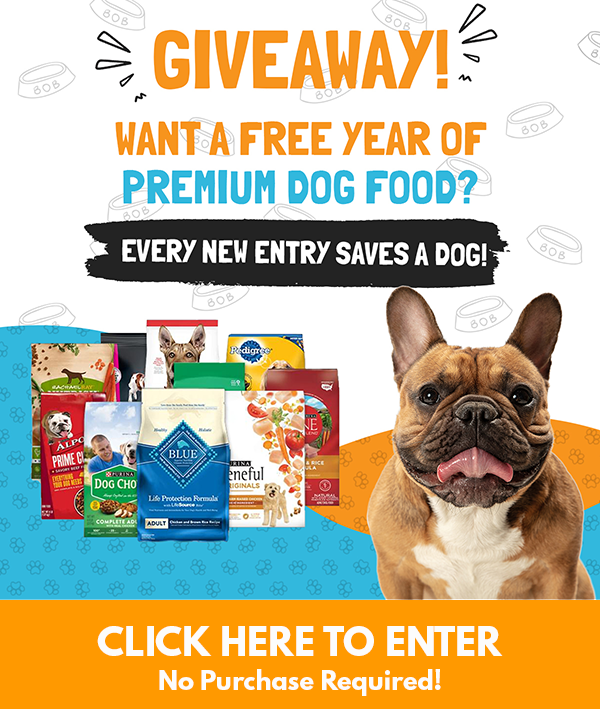 Save A Dog Just By Entering The Giveaway!